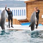 dolphin park bodrum