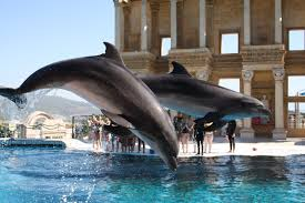 dolphin park kusadasi