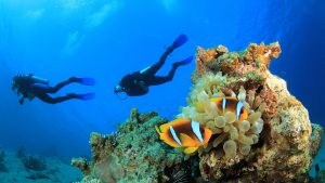 WHA_diving